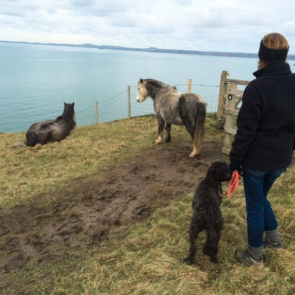 Dog Walker and Ponies on Coast Path